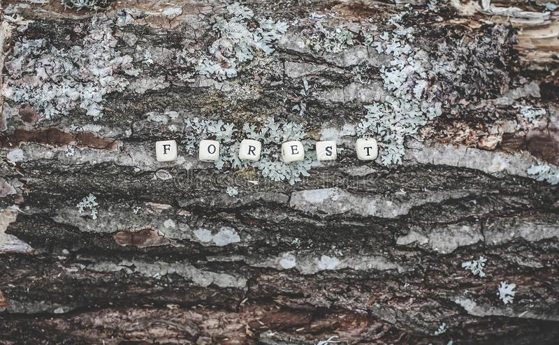 Word forest of wooden alphabet beads on a tree bark surface in the forest. Word forest of wooden alphabet beads on a tree bark rough surface in the forest stock photos