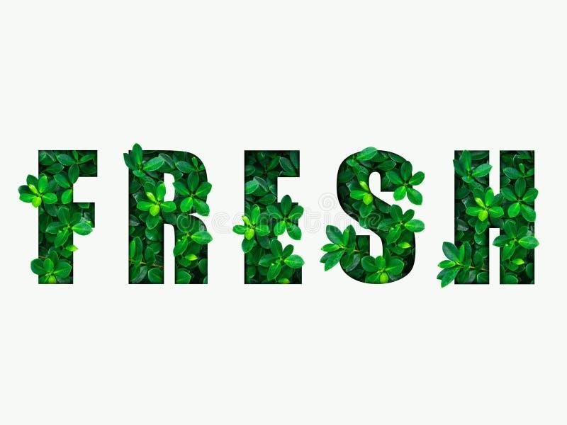 Word FRAIS des feuilles vertes photo libre de droits