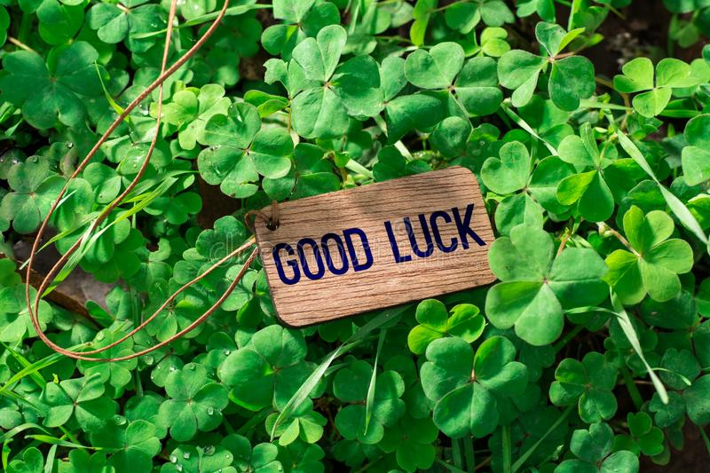 The word good luck wooden tag. On Clover royalty free stock photography