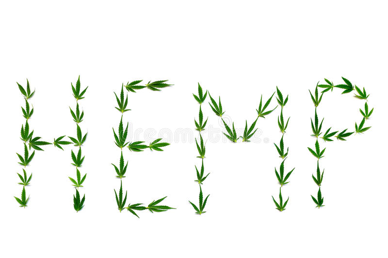Word HEMP made of green leaves on white background royalty free stock image