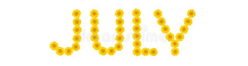 Word JULI De brieven worden gemaakt van heldere gele bloemenchrysanten De stemming van de zomer Witte ge?soleerde achtergrond royalty-vrije illustratie