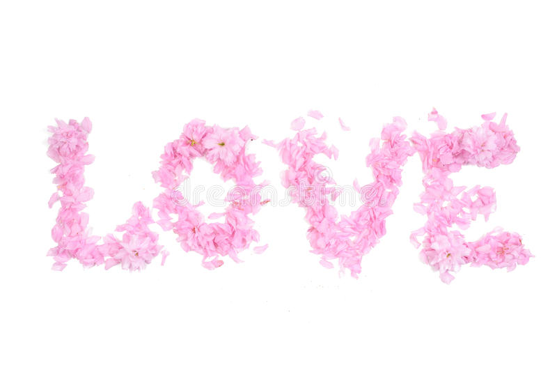 Word love composed from pink petals and flowers. On white background stock images