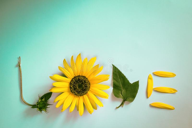 Word LOVE made out of sunflower, leaves and petals. Flat lay. Love concept, minimal style. Word LOVE made out of sunflower, leaves and petals . Flat lay. Love stock photography