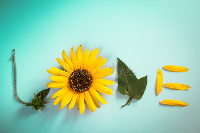 Word LOVE made out of sunflower, leaves and petals. Flat lay. Love concept, minimal style. Word LOVE made out of sunflower, leaves and petals . Flat lay. Love royalty free stock image