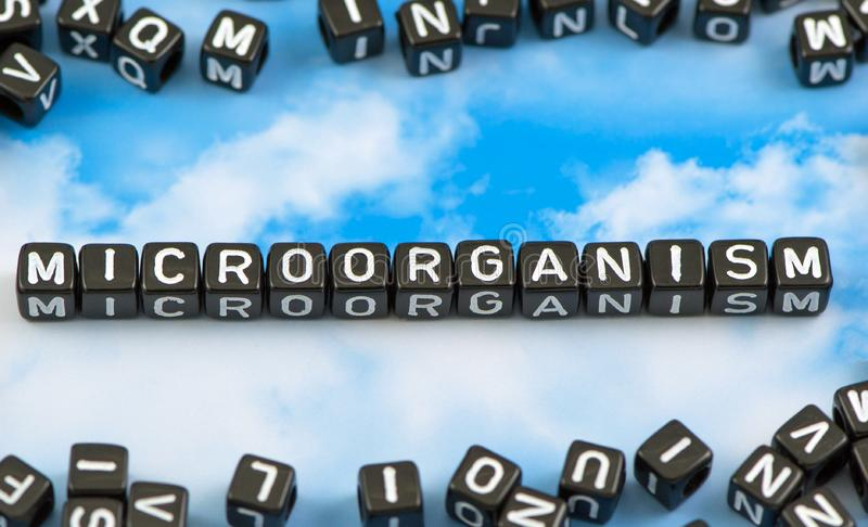 The word microorganism royalty free stock image