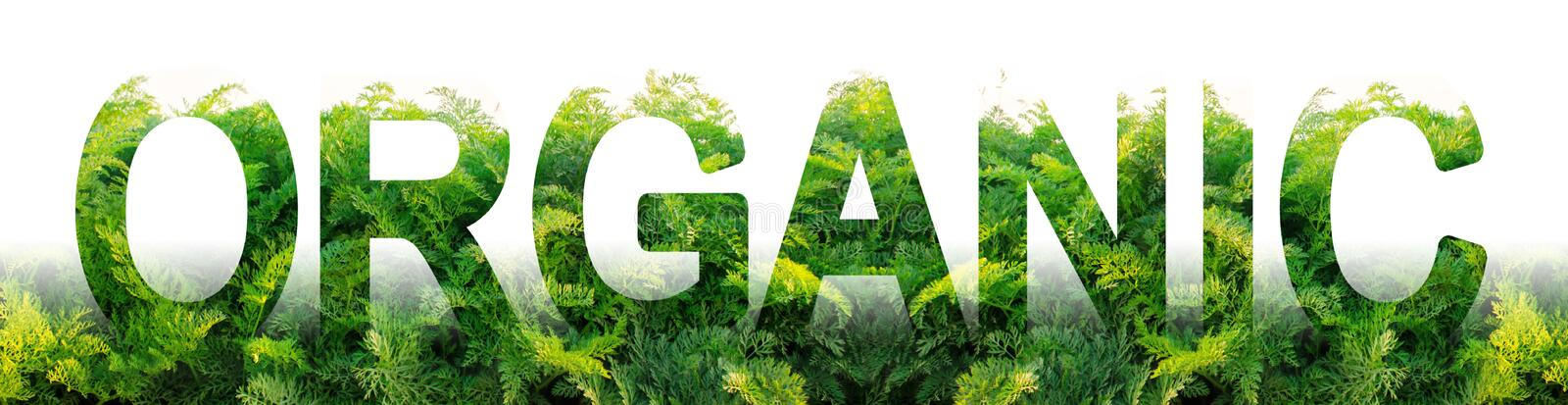 The word Organic on the background of a plantation field of green carrot leaves. Farming in ecologically clean areas. growing. Without of harmful chemicals stock photography