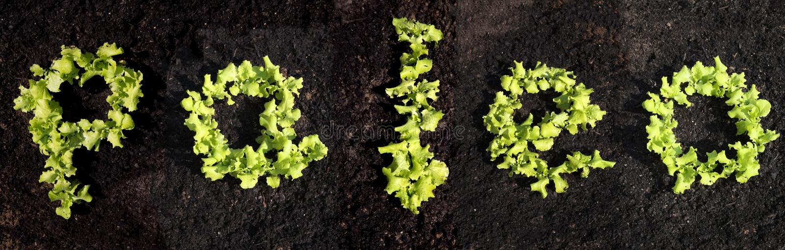 Word paleo with lettuce. Word paleo with growing lettuce royalty free stock image