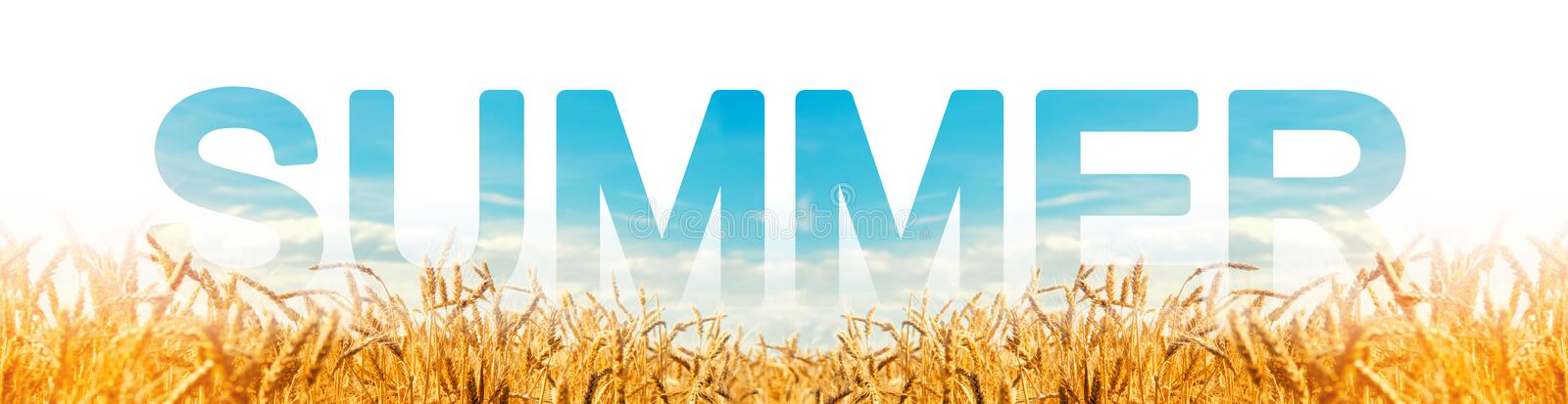 The word summer on the background of yellow wheat plantation field. Winter crops. Season of the year, active phase of growing. Harvest time. Beautiful view of royalty free stock photos