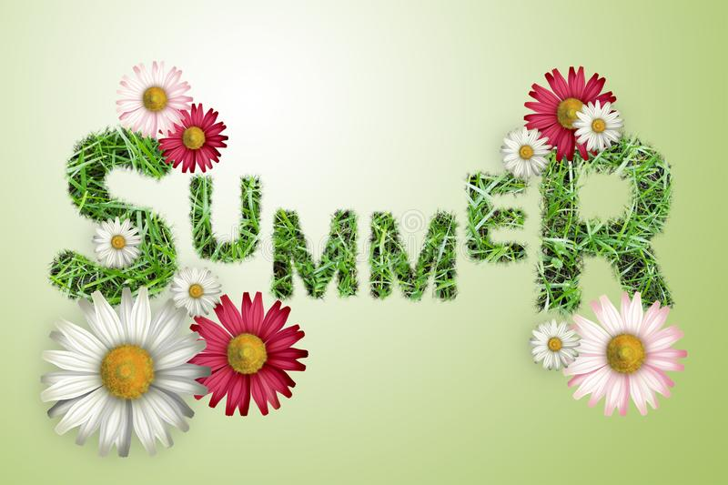 The word summer texture of a green grass, white and pink daisies on a green background, stock images