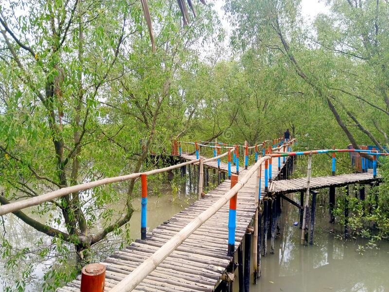 Sundarban -The queen of beauty, Khulna, Bangladesh. The word Sundarban means the beautiful Forest. Sundarban is the biggest mangrove forest in the world stock image