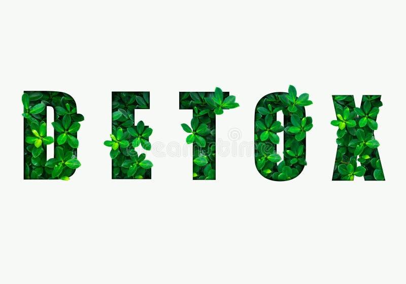 Word wordt detox gemaakt van groene bladeren Concept die dieet, het lichaam, het gezonde eten, ditital detox reinigen vector illustratie
