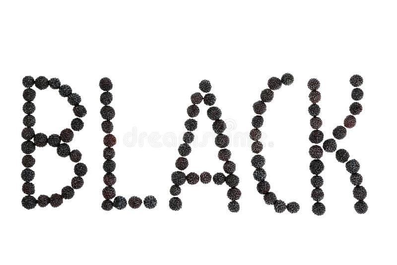 Word Zwarte met braambes wordt gevoerd die stock afbeeldingen
