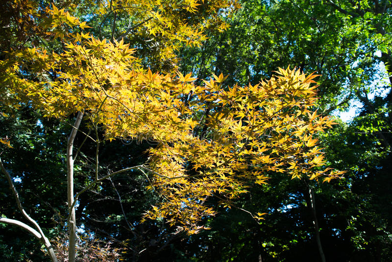 Wordend de herfst stock foto