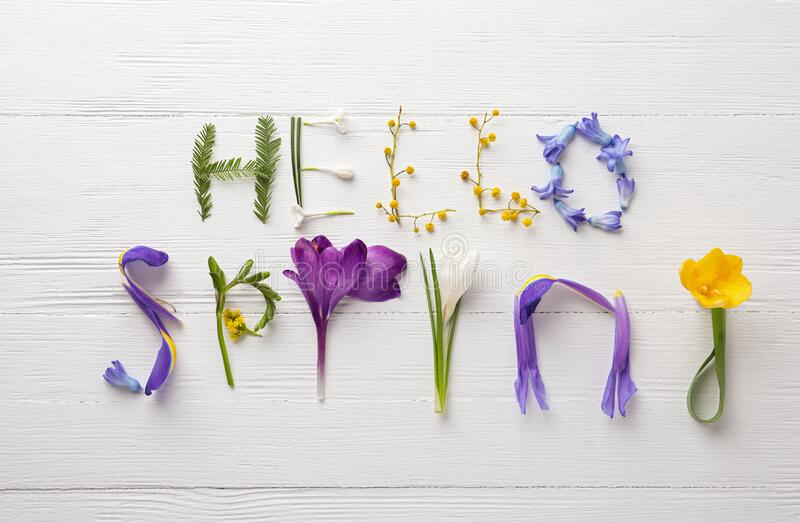 Words HELLO SPRING made of fresh flowers on wooden table, flat lay. Words HELLO SPRING made of fresh flowers on white wooden table, flat lay stock images