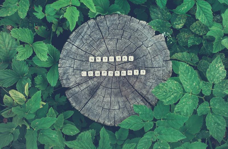 Words natural components of beads on a tree stump surface in the forest. Words natural components of wooden alphabet beads on a tree stump surface in the forest royalty free stock photo