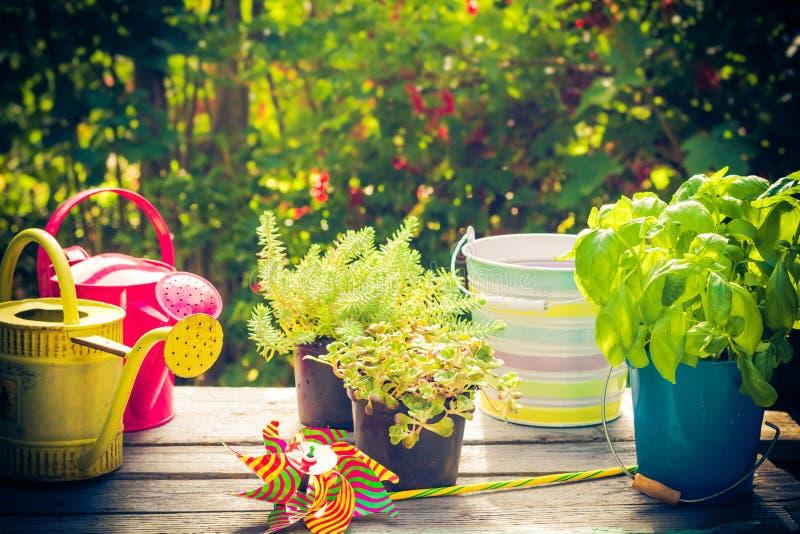 Work garden herbs flowers summer. Work in the garden: herbs and flowers in summer stock photos