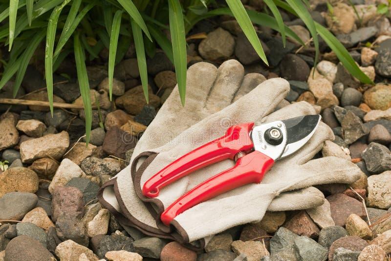 Work gloves and hand pruner