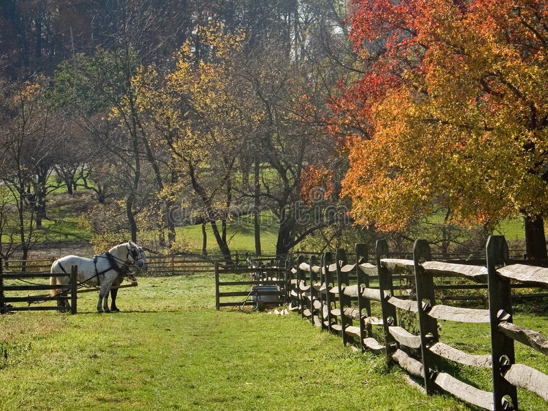 Work Horses stock image