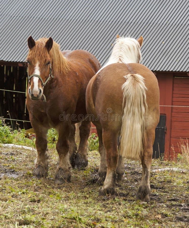 Work horses stock photos