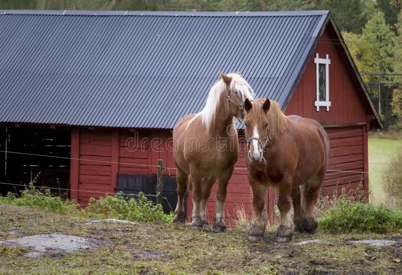 Work horses stock photo