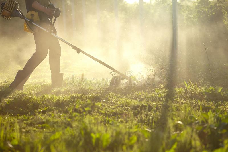 Work to mow the grass trimmer. the process of mowing tall grass with a trimmer. selective focus on uncut Tawa and scatter. Work to mow the grass trimmer. process royalty free stock photos