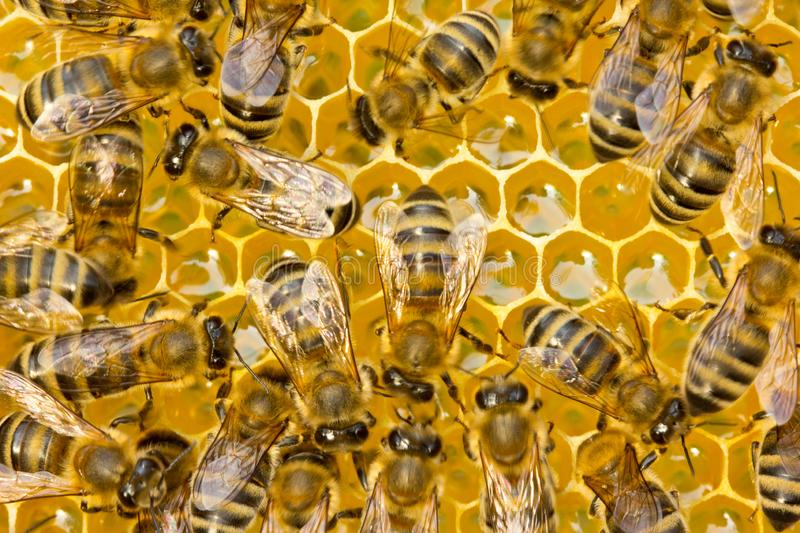 Work of young bees stock images