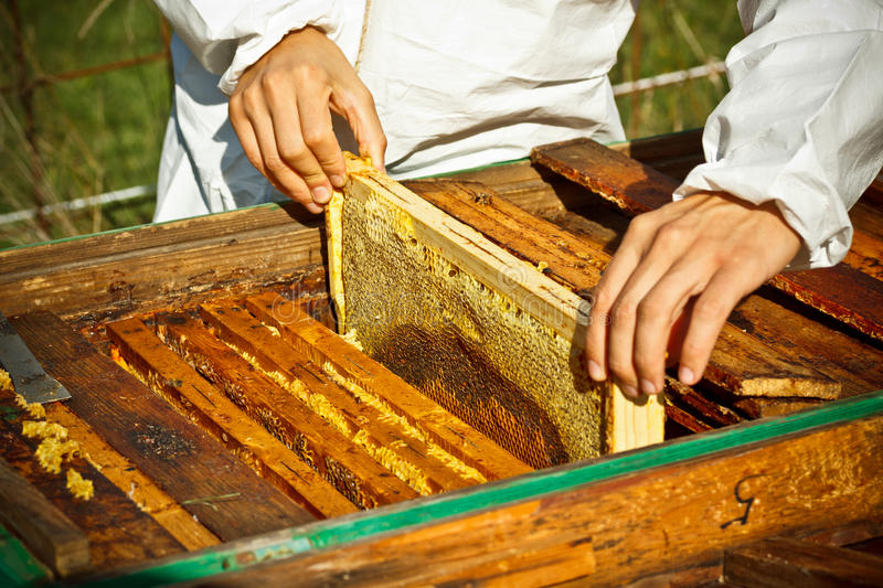 Worker bees on honeycomb. Outdoor shot royalty free stock photography