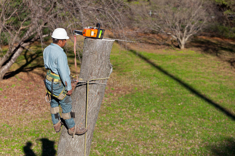 Download Worker with Chainsaw stock image. Image of risk, danger - 23636389