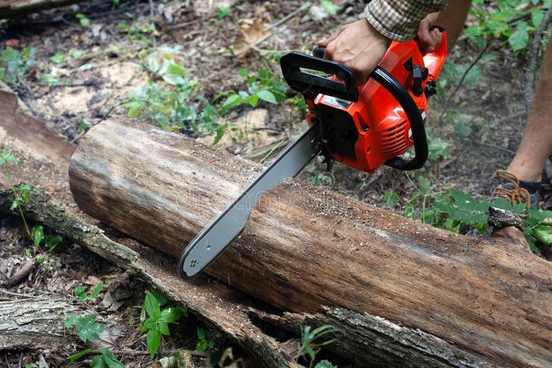 Worker chainsaw sawing forest trees, cutting wood stock photos