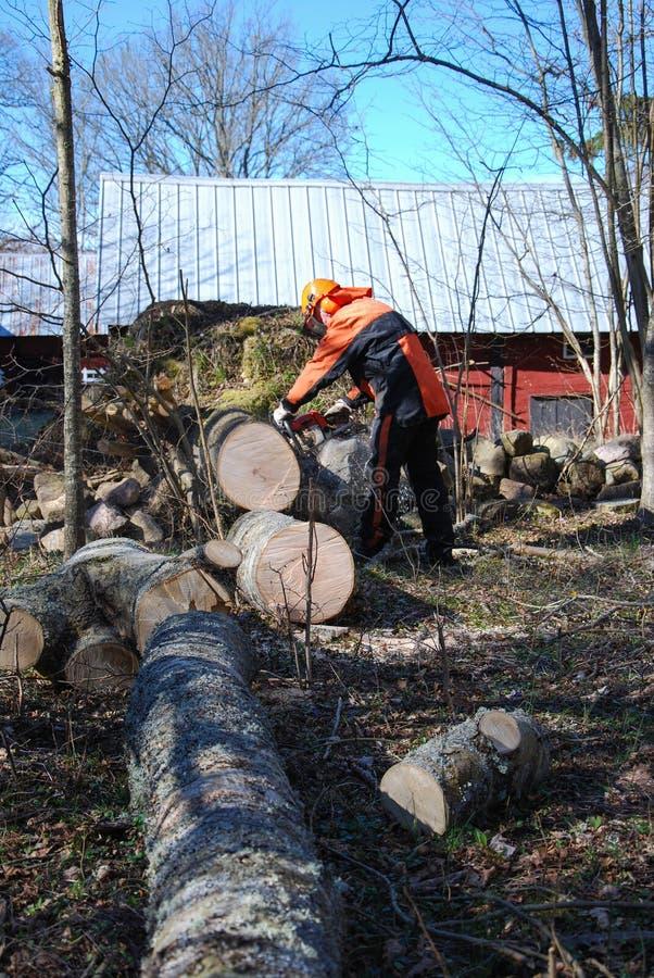 Worker cuts a wind fallen tree stock photos