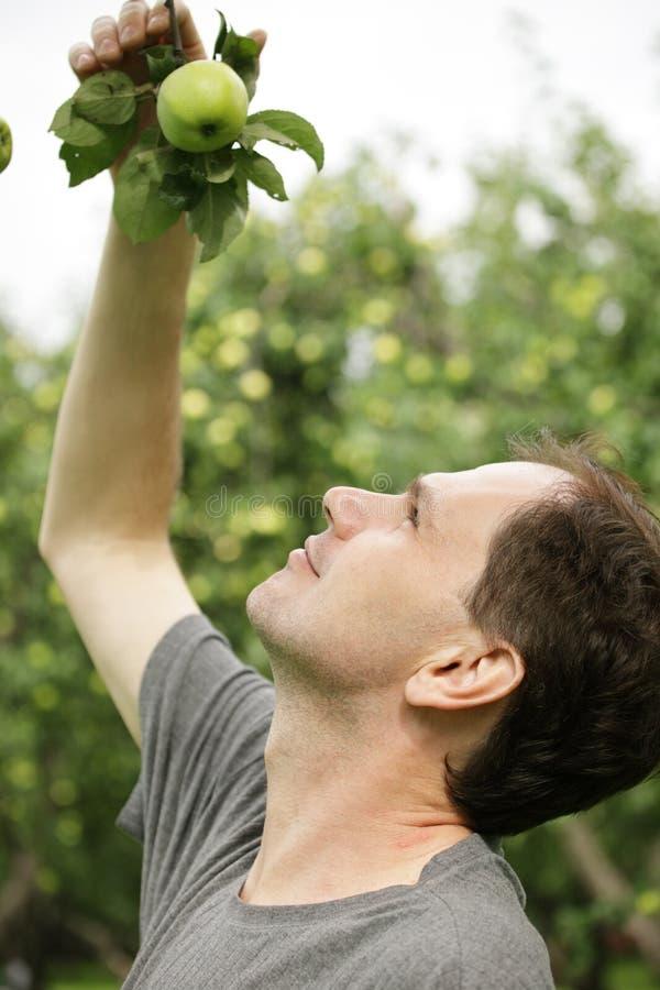 Worker in a garden stock photo