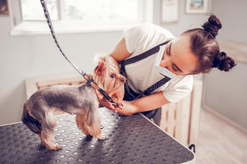 Worker of grooming salon feeling busy while taking care of dog royalty free stock photos