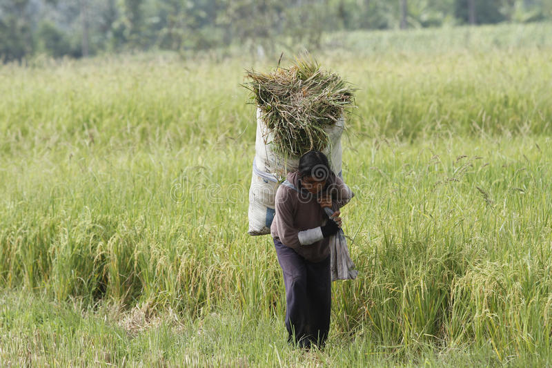 Download Worker editorial stock photo. Image of indonesia, boyolali - 35267728
