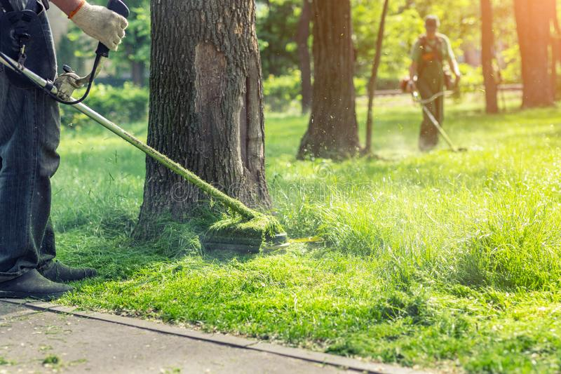 Worker mowing tall grass with electric or petrol lawn trimmer in city park or backyard. Gardening care tools and equipment. Process of lawn trimming with hand stock photography