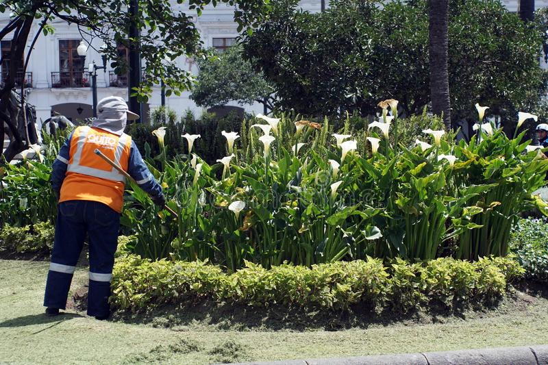 Worker in the park in Quito royalty free stock image