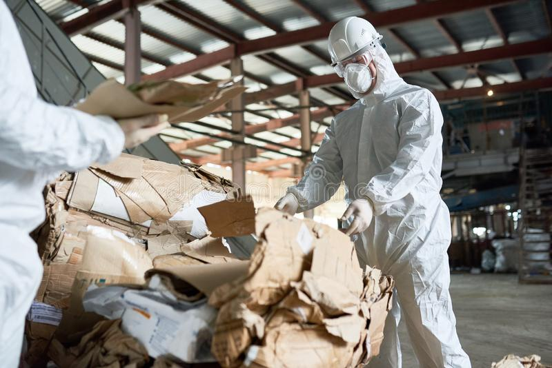 Worker in Protective Suit Sorting Cardboard at Factory. Portrait of factory worker wearing biohazard suit sorting recyclable cardboard on waste processing plant stock photo