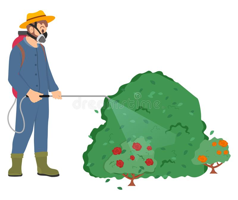 Worker Spraying Bushes of Plants, Roses Flora. Man wearing special protective uniform vector, male with respirator and sprayer, farmer spraying roses bushes in vector illustration