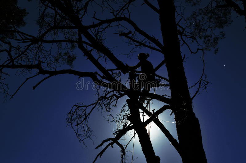 Worker on the tree royalty free stock images