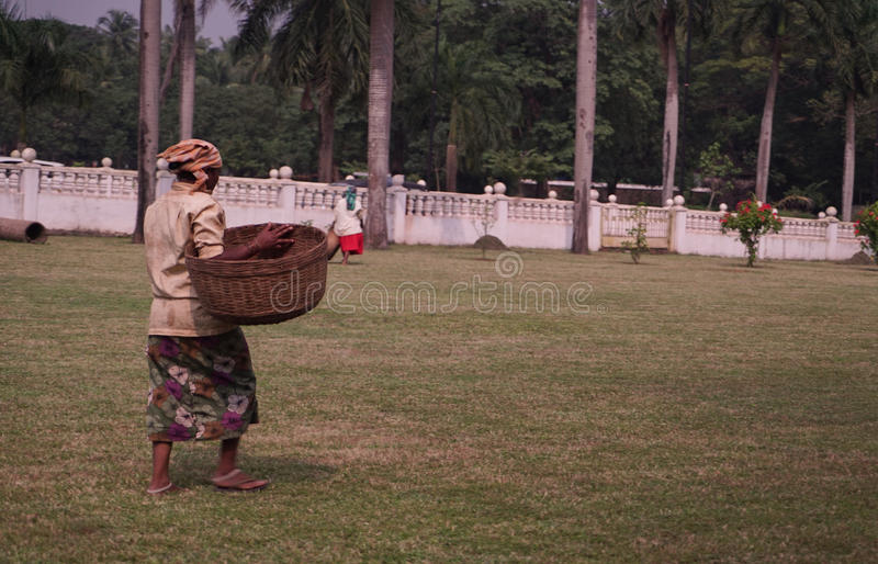 Worker woman with basket walking on grass. India stock photography