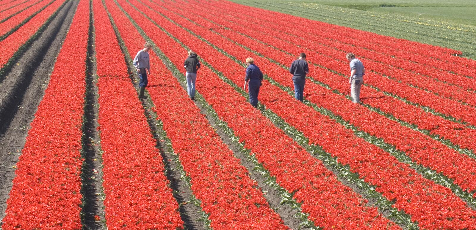 Download Workers in the field stock image. Image of people, crop - 109869