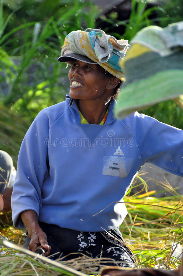 Download Workers in harvest rice editorial stock photo. Image of worker - 15594563