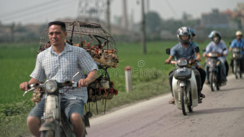 Workers on motorbikes, Hanoi, Vietnam. Workers on motorbikes on rural roadway near Hanoi, Vietnam royalty free stock photography