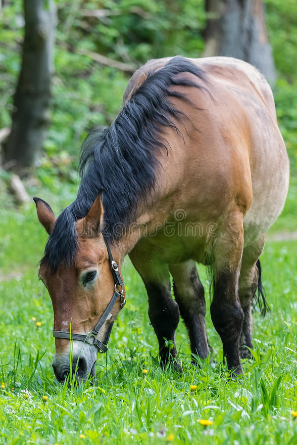 Workhorse inactive after work. Workhorse is inactive after hard work royalty free stock photo