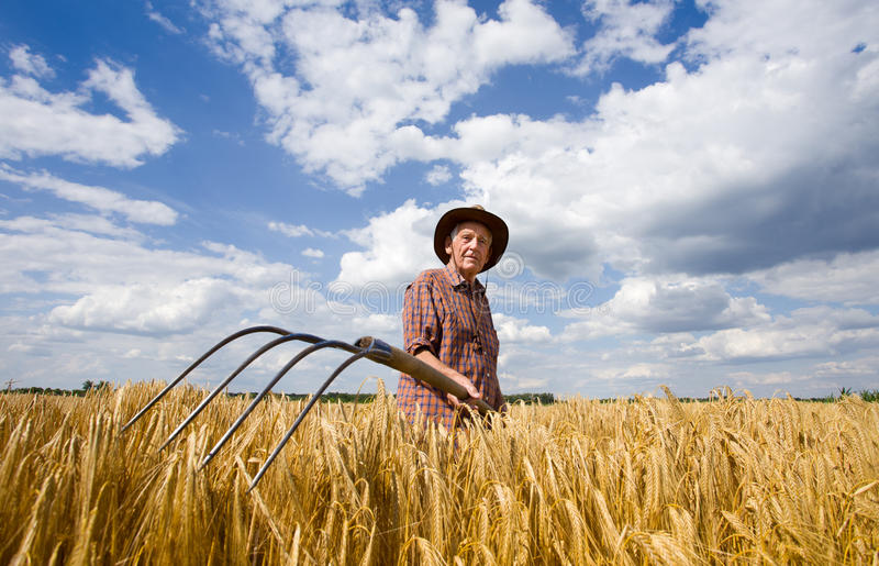 Working in barley field stock photography