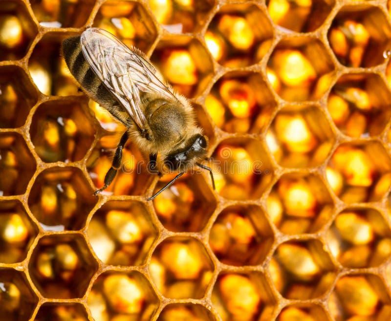 Working bee stock image