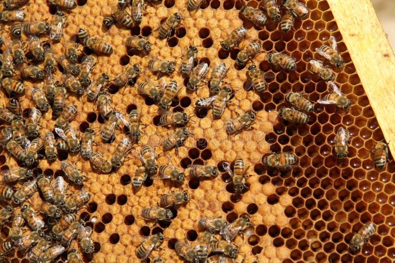 Working bee stock photos