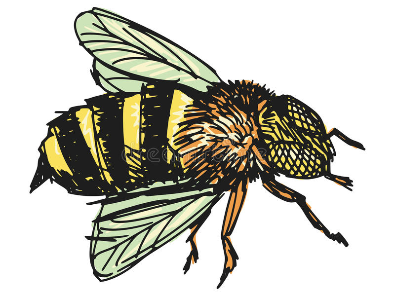 Working bee. Sketch, doodle, hand drawn illustration of bee stock illustration