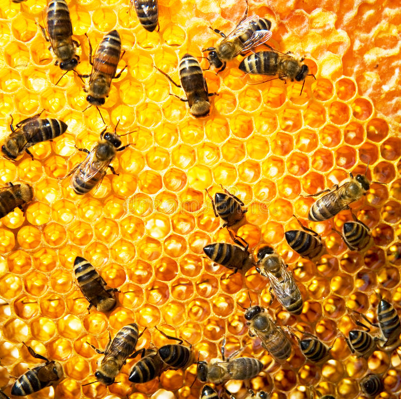 Download Working Bees Stock Photography - Image: 16441072
