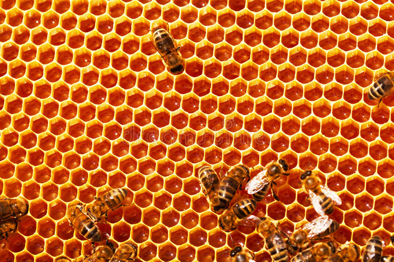 Working bees on honeycombs stock image