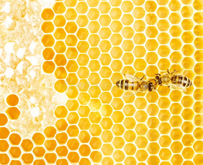 Working bees stock photography
